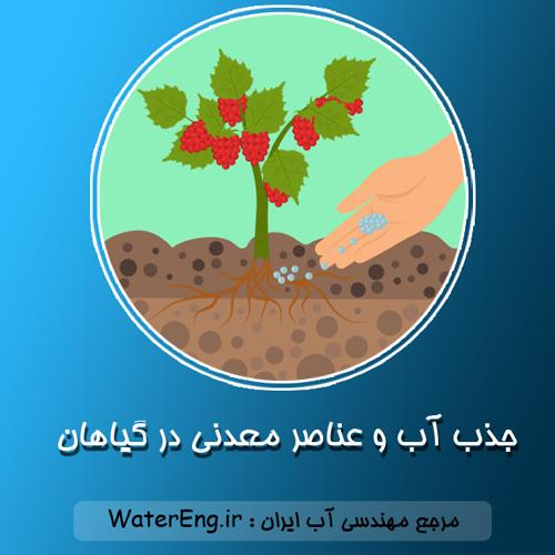 جذب آب و عناصر معدنی در گیاهان